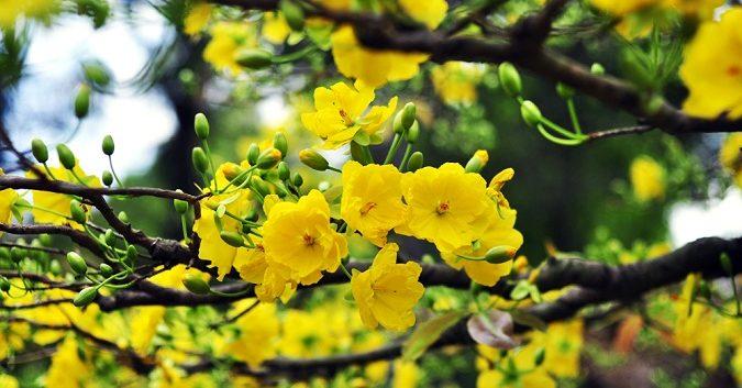 y nghia cac loai hoa va cay canh trong ngay tet 7