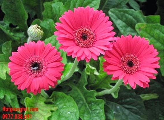 y nghia cac loai hoa va cay canh trong ngay tet 9 2